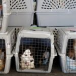 Минтранс РФ планирует пересмотреть нормы перевозки животных в салоне самолета