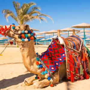 На курорты Египта рейсами «России»
